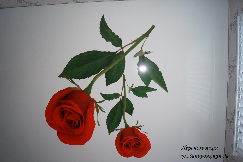 Переясл.Запорожская 9аПопопа (8)